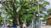 টানা ৫ দনি আমদানি বন্ধে স্থবরি স্থলবন্দর বনোপোল