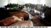 দু:শ্চিন্তায় নওগাঁর ৩১ হাজার খামারি