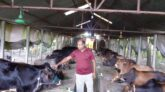 অনলাইনে কোরবানির গরু বিক্রি করে সফল খামারি কাইয়ুম