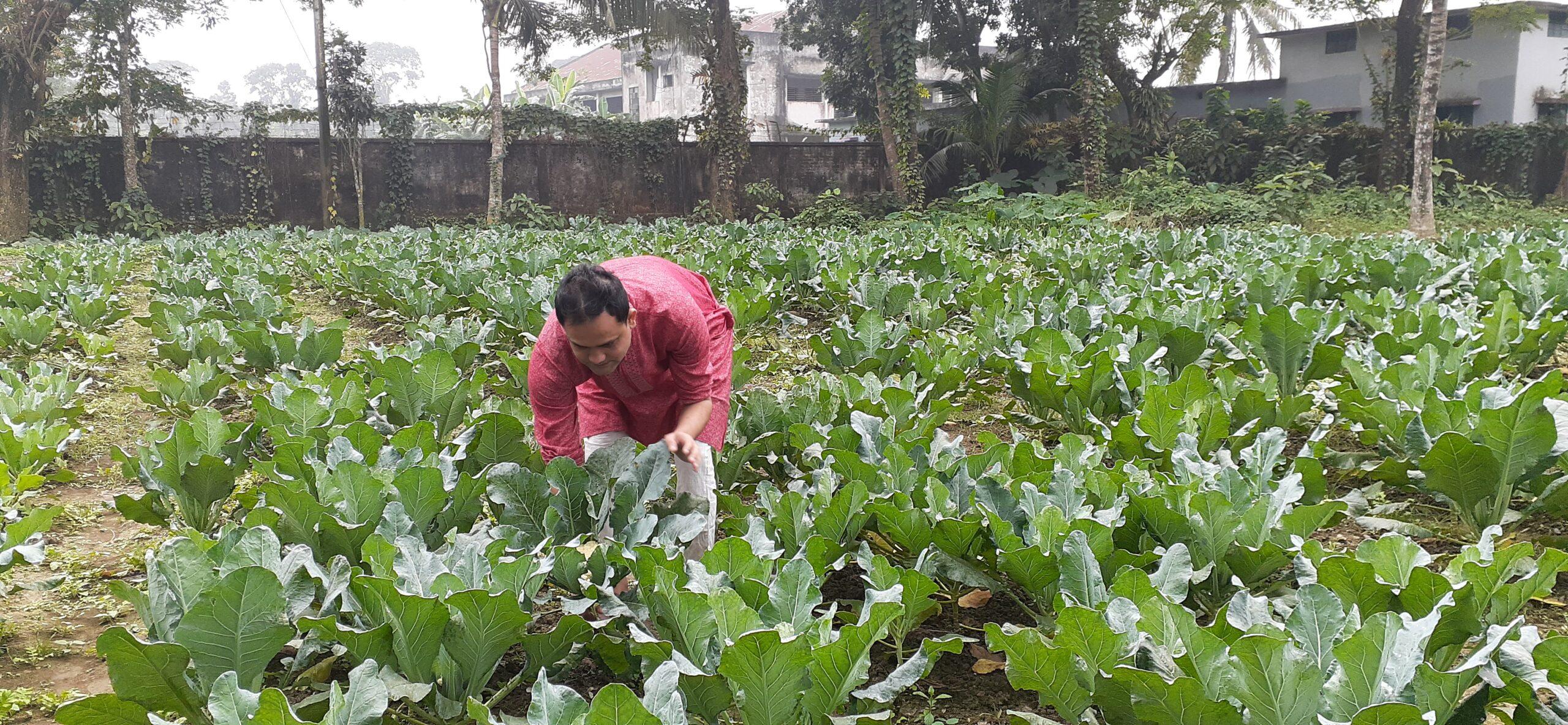 নাঙ্গলকোট থানায় বিষমুক্ত সবজী চাষ