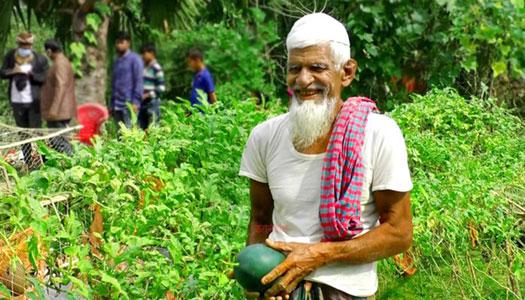 ব্ল্যাক বেবি তরমুজ চাষে আশার আলো