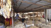 ভরা মৌসমে রংপুরের বৃহত্তর শুঁটকির আড়ত ক্রেতা শূন্য