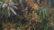 শীতে গাছে ঝুলছে আমের মুকুল, ছড়াচ্ছে সুবাস