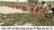 নওগাঁর নদনদী গুলো শুকিয়ে যাচ্ছে পলো দিয়ে মাছ ধরার উৎসব