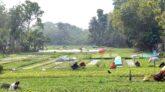 গ্রাফটিং কলম তৈরীতে ব্যস্ত নার্সারী শ্রমিকরা