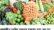 মধুখালীতে রমজান মাসে চড়া দামে বিক্রি হচ্ছে সবজি
