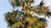 বিলুপ্তির পথে বাসা তৈরির সুনিপূণ কারিগর বাবুই পাখি