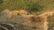 পাহাড়ের মাটি যাচ্ছে ইটভাটায়, বাদ যাচ্ছে না ফসলি জমিও