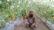 ঝিনাইদহে তুপ্তি তরমুজ চাষে সফল কৃষক রশিদ
