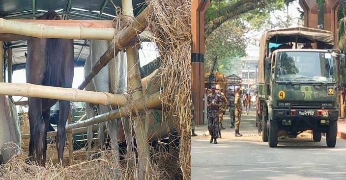সেনাবাহিনীকে প্রশিক্ষণপ্রাপ্ত ১৫টি ঘোড়া দিল ভারত