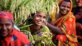 অর্থনৈতিক ও জঙ্গিদমনে সাফল্যই বাংলাদেশকে জয় এনে দিয়েছে জাতিসংঘে