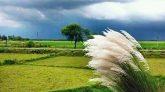 প্রকৃতিতে বছর ঘুরে আগামীকাল আসছে হেমন্ত